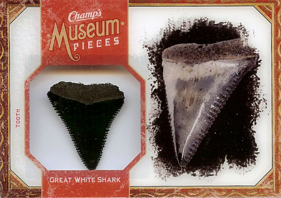 Sharknado-2011-Champs-Museum-Pieces-Great-White-Shark-Tooth
