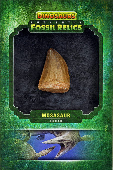 2015-Upper-Deck-Dinosaurs-Fossil-Relic-Cards-Mosasaur-tooth