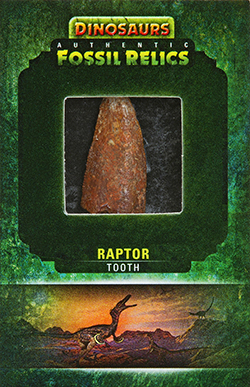 2015-Upper-Deck-Dinosaurs-Fossil-Relic-Cards-Raptor-Tooth