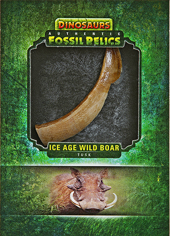2015-Upper-Deck-Dinosaurs-Fossil-Relic-Cards-Wild-Boar-Tusk